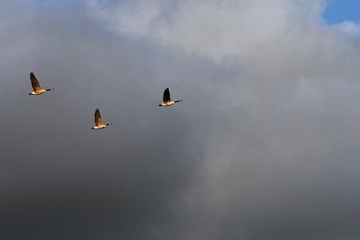 Birds, Fly, Three, Nature, Animal, Flight, Natural, Sky