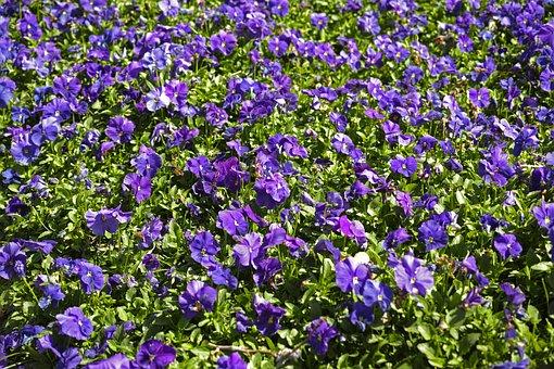 Flower, Spring, Garden, Botanical, Romantic, Nature
