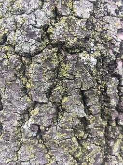Tree, Bark, Trunk, Wood, Texture, Nature, Tree Trunk