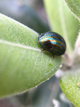 Bug, Macro, Insect, Close Up, Green, Plant, Leaf