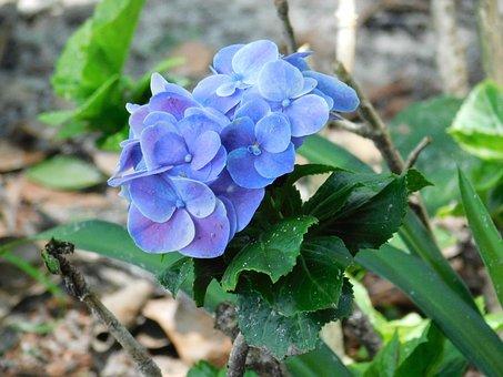 Flower, Purple, Blue, Purple Flower, Purple Flowers