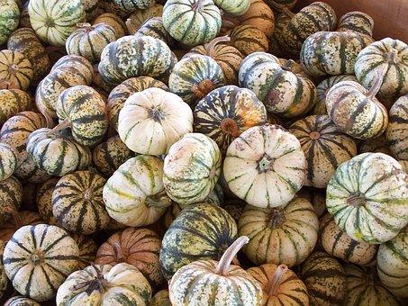 Autumn, Squash, Pumpkin