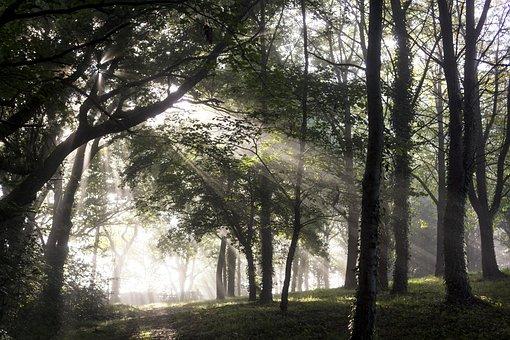 Forest, Undergrowth, Ray Of Sunshine, Sun, Mist, Nature