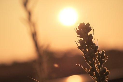 Sun, Plant, Rail Track, Scenery, Bright, Sunset