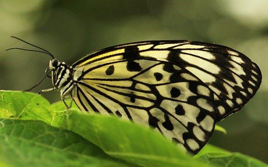 Butterfly, Tropical World, Animal, Flower, Macro