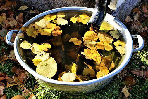 Autumn, Leaf, Water, Yellow Leaves, Barrel, Scabbard