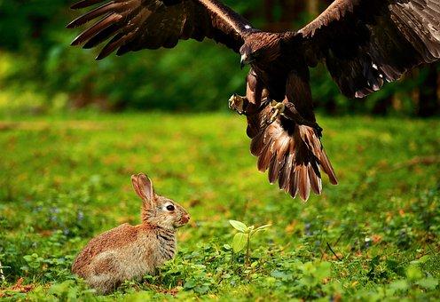 Adler, Bird Of Prey, Raptor, Bird, Wild Bird, Fly, Hare