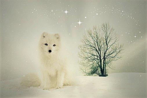 Fuchs, Animal, Wild Animal, Winter, Snow, Animal World