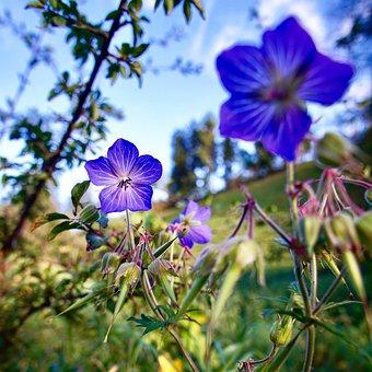 Blossom, Bloom, Nature, Purple, Plant, Flowers