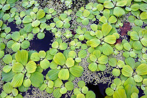Water, Plant, Pond, Botanical, Garden, Park, Nature