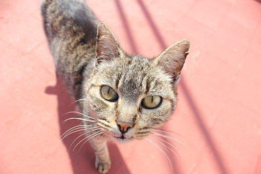 Cat, Look, Feline, Pet, Eyes, Brindle, Gata, Kitten