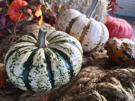 Gord, Gords, Fall, Harvest, Pumpkin