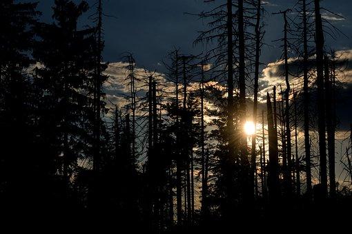 The Sun, Forest, Sky, Tree, West, Nature, Light, Park
