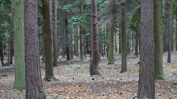 Swinley, Forest, England