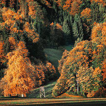 Autumn, Autumn Colours, Trees, Forest, Golden Autumn