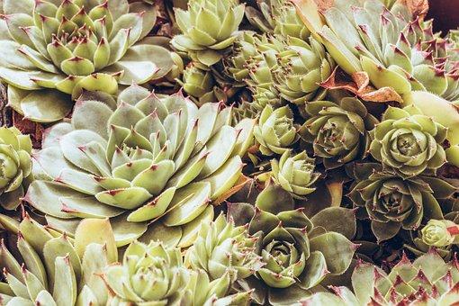 Plants, Garden, Gardening, Agriculture