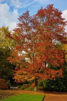Mönchengladbach, Colorful Garden, Tree, Garden, Leaf