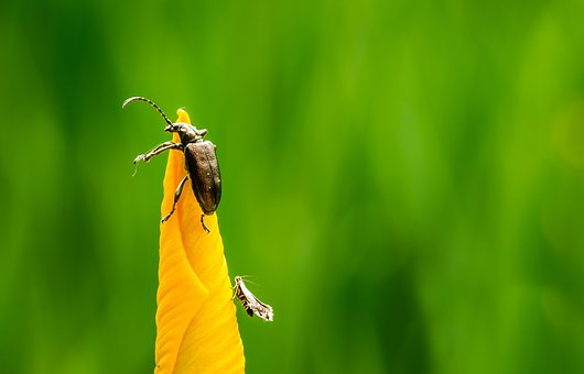 Insect, Nature, Green, Natural, Plant, Bug, Garden