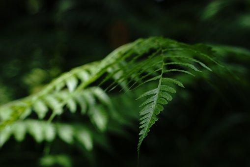 Leaf, Tropical, Bali, Green, Nature, Plant, Natural