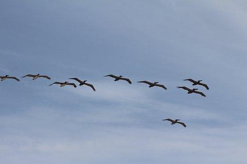 Birds, Flock, Fly, Nature, Flying, Winged, Wildlife