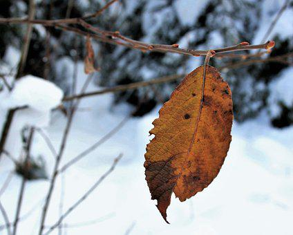 Snow, Nature, Last, Yellow Leaf, The Alps, Mountains