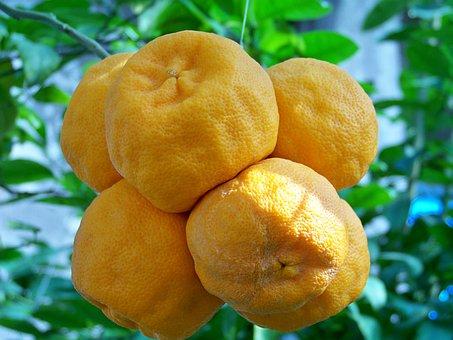 Oranges, Fruit, Southern Fruits, Tropical Fruit, Orange
