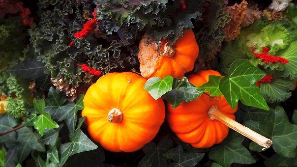 Nature, Pumpkins, Ornamental Pumpkins, Vegetables