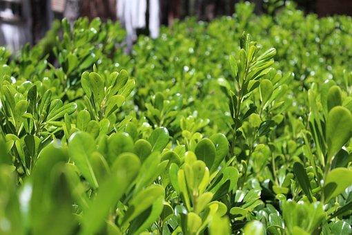 Plants, Green, Flower, Nature, Forest, Garden, Free