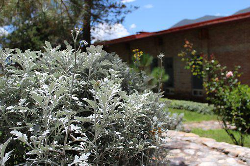 Garden, Summer, Plants, Nature, Natural, Creation