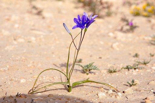 Flower, Purple, Purple Flower, Plant