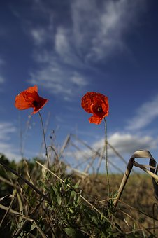 Poppy Flower, Sky, Red, Flower, Klatschmohn, Poppy