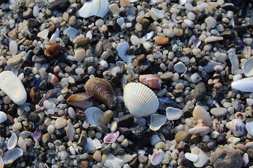 Sand, Shells, Beach, Sea, Summer, Ocean, Seashell