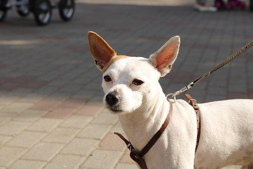 Dog, Animals, Pets, Dogs, The Dog Looks, Pet, Small Dog