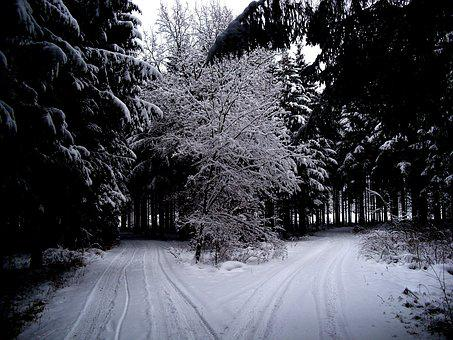 Winter, Winter Forest, Snow, Forest, Wintry, Cold