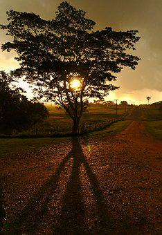 Tree, Sunset, Shadow, Drizzle, Gravel, Road, Sky