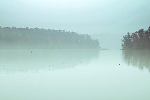 Lake, The Fog, Pond, Reflection, Forest, Tree, Morning