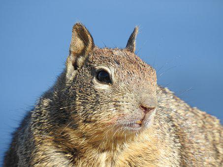 The Land List, Squirrel, Business, Animal, Wildlife