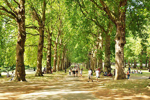 Green Park, London, Uk, England, Park, Tree, City