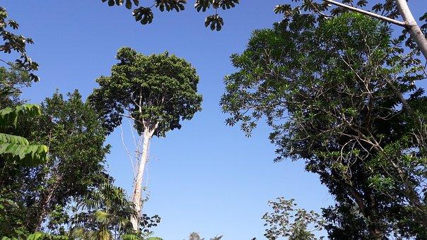Jungle, Tree, Trunk