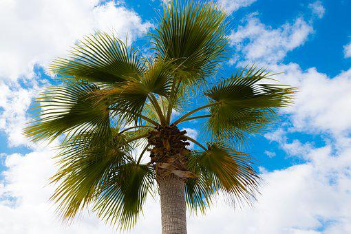 Palm, Plant, Summer, Palm Tree, Sky, Travel, Vacation