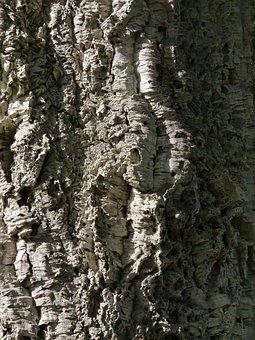 Trunk, Wood, Texture, Tree Trunk, Bark, Trees, Biomass