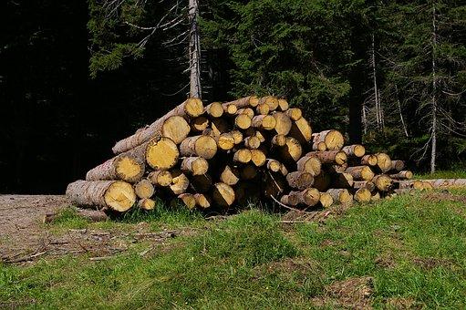 Wood, Trunks, Bark, Trees, Mountain, Woods