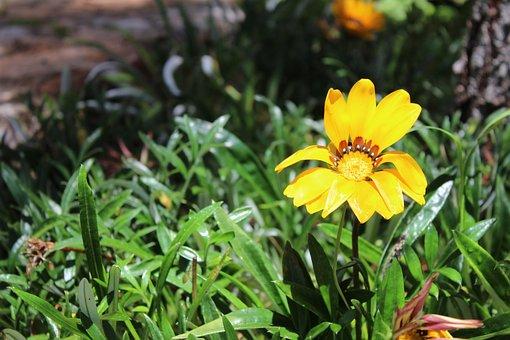 Flower, Yellow, Petals, Nature, Garden, Green, Plant