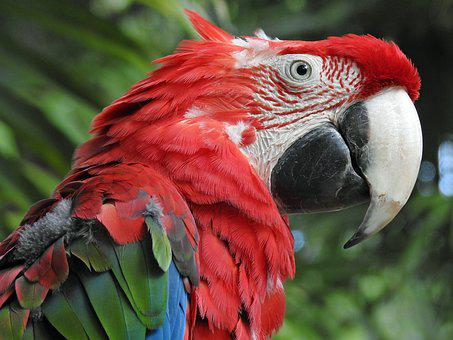 Parrot, Bird, Animal, Pen, Exotic