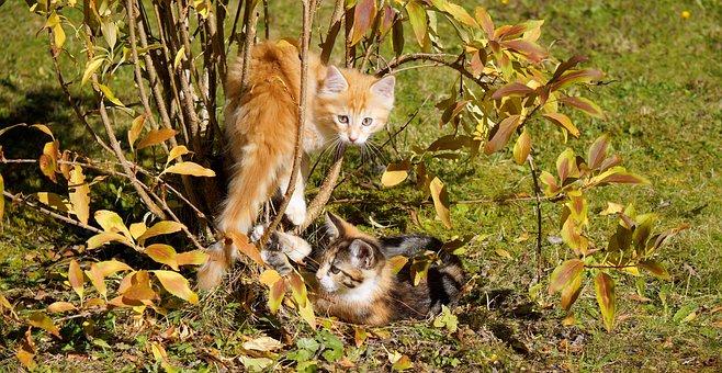 Cats Guys, Cat, Kitten, Cute, Baby Kitten, Domestic Cat