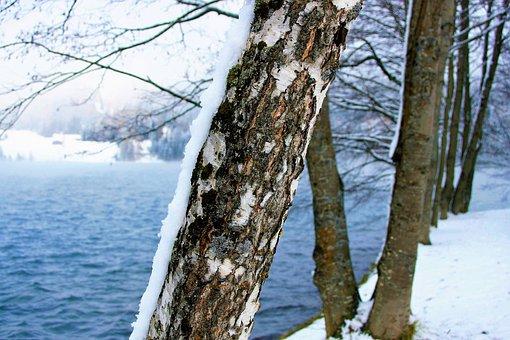 Winter, Snow, Lake Alpine, Davos, Closeup, Tree, Sprig