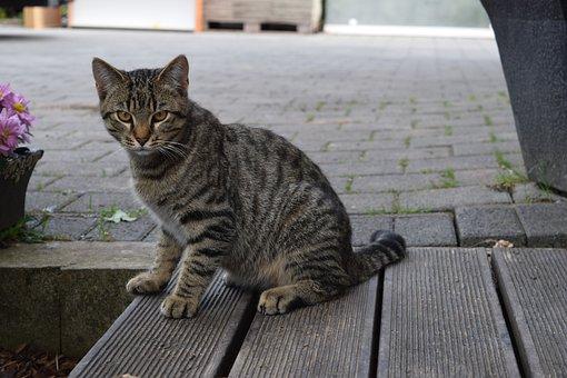 Cat, Domestic Cat, Young Cat, Pet, Animal, Mackerel