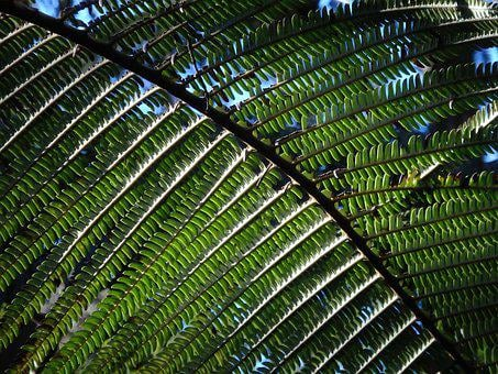 Fern, Jungle, Rainforest, Plant, Forest, Nature