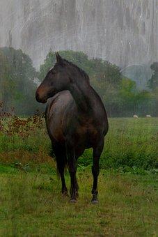 Barnham Broom, Horse, Field, Trees, Nature, Grass