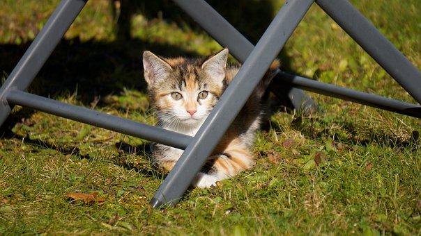 Cat, Animal, Kitten, Pet, Outdoor, Eyes, Green Eyes